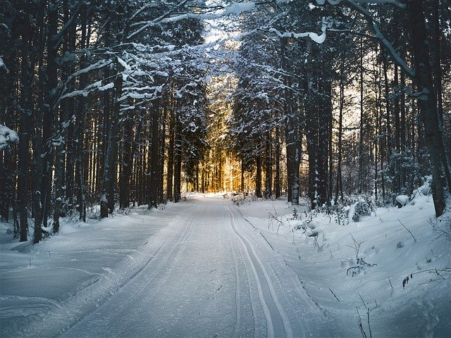 cross-country skiing trail in forest